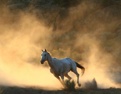 istock_000004350724xsmallwhite-horse
