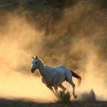 iStock_000004350724XSmallwhite horse